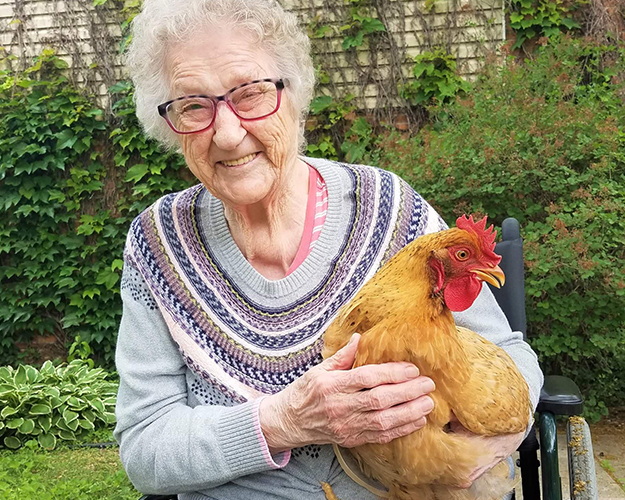 Parmly is raising chickens for the summer! We have several chickens that live in one of our garden courtyards next to the dining room so the residents get to enjoy them.