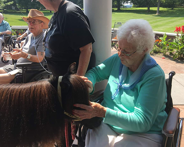Mini Horse Visits