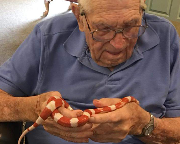 An unusual visit from a little corn snake.